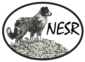 National English Shepherd Rescue